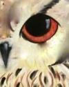 B7  Owl Close Up