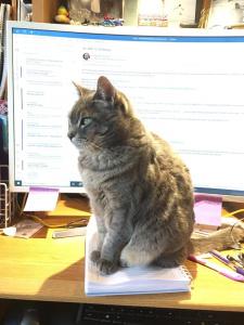 Mairi's Cat